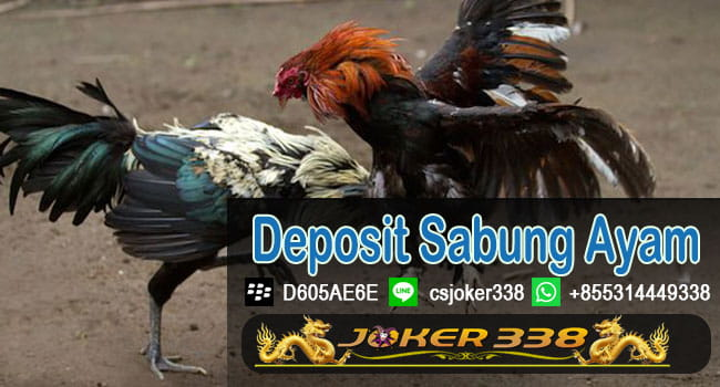 Deposit Sabung Ayam