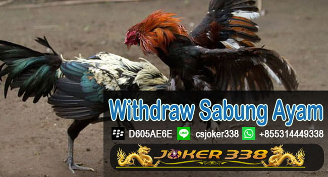 Withdraw Sabung Ayam