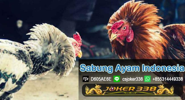 Daftar Sabung Ayam Indonesia