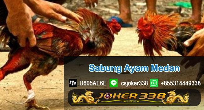 Sabung-Ayam-Medan